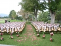 bayles-wedding02